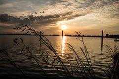 Bloem voor de zonsondergang Stock Foto
