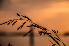 Bloem voor de zonsondergang Stock Foto's