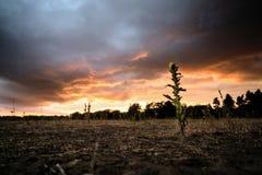 Bloem voor kleurrijke gloeiende wolken royalty-vrije stock afbeeldingen