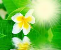 Bloem, water en zonnestralen Stock Foto