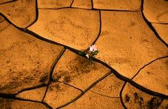 Bloem in woestijn royalty-vrije stock afbeelding