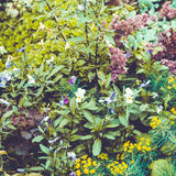 Bloemachtergrond in de de zomertuin Royalty-vrije Stock Afbeeldingen