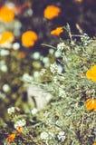 Bloemachtergrond in de de zomertuin Stock Afbeelding
