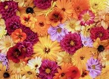 Bloemachtergrond van tuinbloei stock afbeeldingen