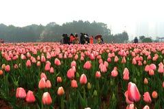 Bloembed in botanische tuin Stock Foto