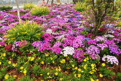 Bloembed in botanische tuin Stock Afbeeldingen