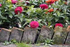 Bloembed in de tuin Royalty-vrije Stock Fotografie