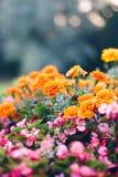 Bloembed in de tuin met decoratieve bloemen stock foto