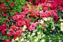 Bloembed met bloemen Royalty-vrije Stock Afbeeldingen