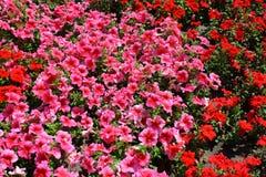 Bloembed met bloemen royalty-vrije stock foto's