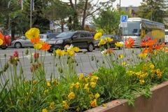 Bloembed met bloemen naast de weg Stock Afbeeldingen