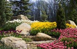 Bloembed met bloemen, witte, gele, rode tulpen, rotsen en groen gras Stock Afbeeldingen