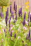 Bloembed met diverse de zomerbloemen royalty-vrije stock afbeelding