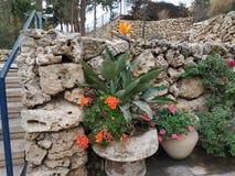 Bloembed met een exotische bloem stock foto