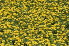 Bloembed met gele bloemen Royalty-vrije Stock Afbeeldingen