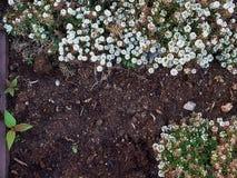 Bloembed met kleine witte bloemen royalty-vrije stock afbeelding