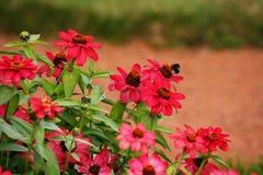 Bloembed met rode bloemen Stock Fotografie