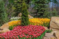 Bloembed met tulpen in de tuin Royalty-vrije Stock Fotografie
