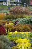 Bloembed met verschillende kruiden in de herfst royalty-vrije stock afbeeldingen