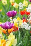 Bloembed met verschillende verscheidenheden van tulpen Royalty-vrije Stock Afbeelding