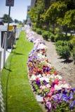 Bloembed op de straat Stock Fotografie