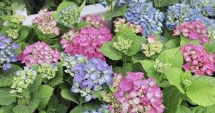 Bloembed van bloemen stock videobeelden