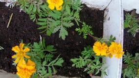 Bloembed van bloemen stock video