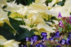 Bloembed van witte bladeren Stock Foto