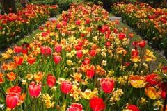 Bloembedden in tuin in de lente Royalty-vrije Stock Afbeeldingen
