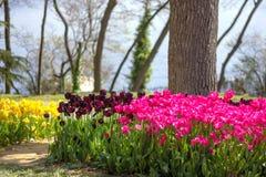 Bloembedden van tulpen bij het Tulpenfestival in Emirgan-Park, Istanboel, Turkije stock afbeelding