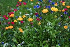 bloemblaadje stock fotografie