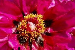bloemblaadje Royalty-vrije Stock Afbeelding