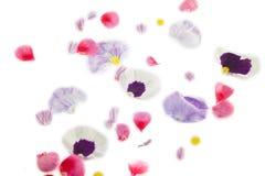 bloemblaadje royalty-vrije stock afbeeldingen