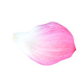 bloemblaadje van de lotusbloembloesem op witte achtergrond Royalty-vrije Stock Afbeeldingen