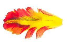 Bloemblaadje van een tulp Macro Royalty-vrije Stock Foto