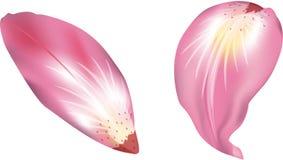 Bloemblaadjes stock illustratie