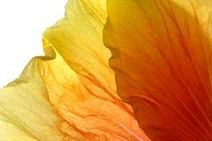 Bloemblaadjes stock fotografie