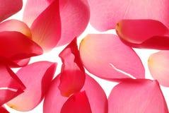 Bloemblaadjes Royalty-vrije Stock Foto's
