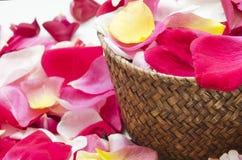 bloemblaadjes Royalty-vrije Stock Fotografie