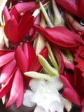 bloemblaadjes Stock Afbeelding