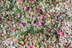bloemblaadjes Stock Foto's