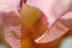 Bloemblaadjes Stock Afbeeldingen
