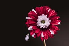 Bloemblaadjes in de wind royalty-vrije stock foto's