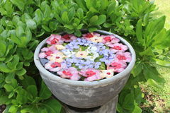 Bloemblaadjes op het water Royalty-vrije Stock Fotografie