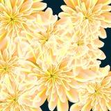 bloemblaadjes rond de achtergrond voor een kaart Stock Foto