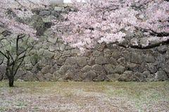 Bloemblaadjes van Cherry Trees Royalty-vrije Stock Afbeeldingen