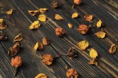 Bloemblaadjes van droge bloemen op houten achtergrond Royalty-vrije Stock Foto's