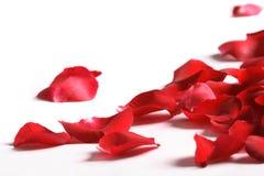 Bloemblaadjes van een roos, op een witte achtergrond Stock Fotografie