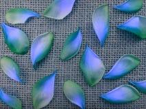 Bloemblaadjes van Plumeria-rubra Tricolor - Blauw en groen royalty-vrije stock foto's