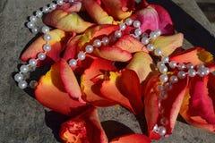 Bloemblaadjes van rode rozen Stock Foto's